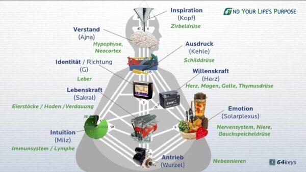 Die 9 Human Design Energiezentren - körperliche Entsprechungen